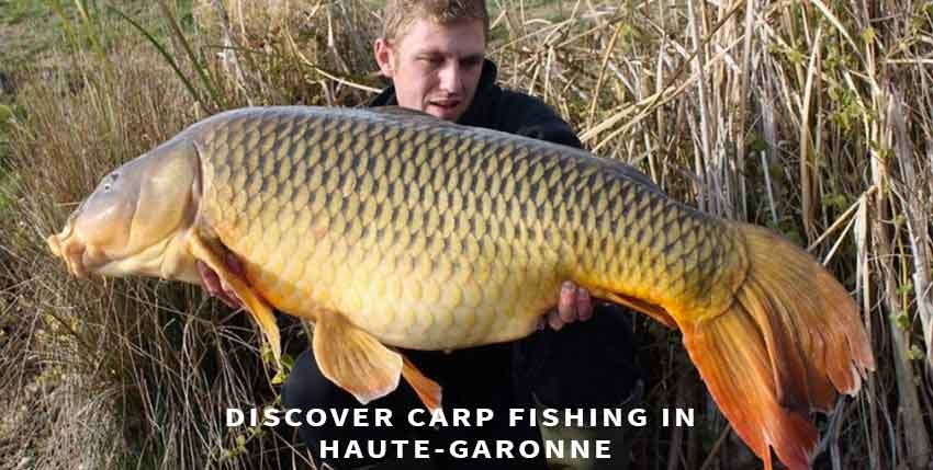 Carp fishing in France in Haute-Garonne