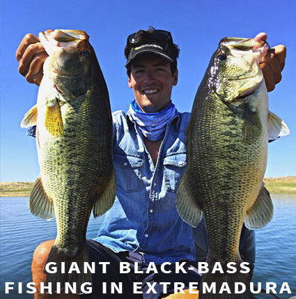 Giant black-bass in Extremadura