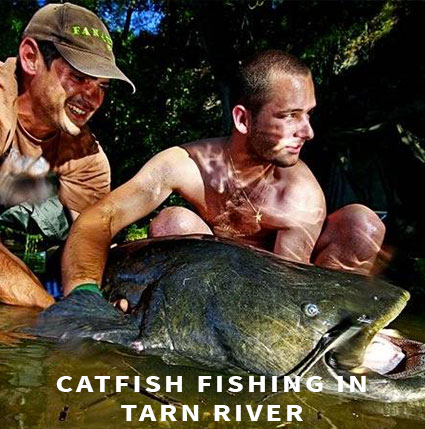 Catfish fishing in Tarn