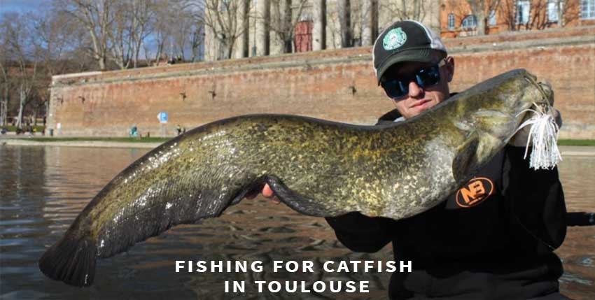 Catfish fishing in Toulouse