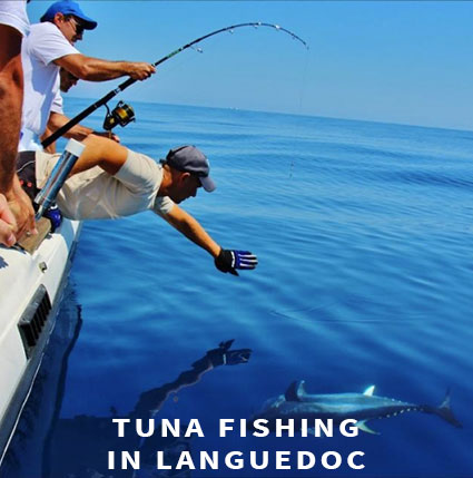 Tuna fishing in Languedoc