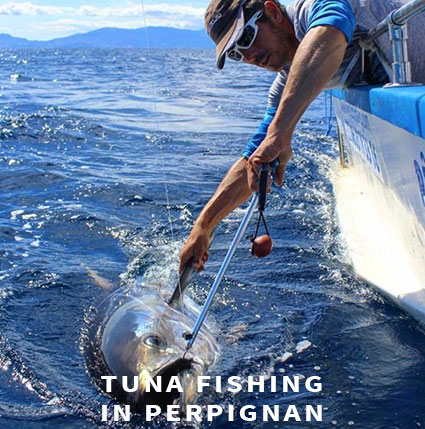 Tuna fishing in Perpignan