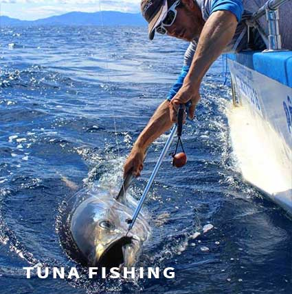 Tuna fishing in France