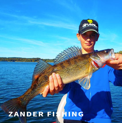 Zander fishing in France