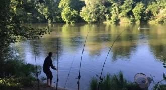 Stage de pêche du silure du bord