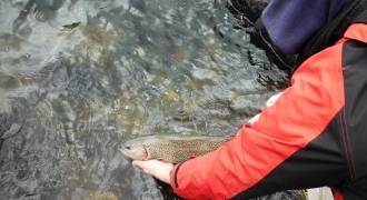 Fly fishing initiation in Indre