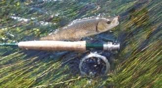 Initiation à la pêche à la mouche sur l'Indre