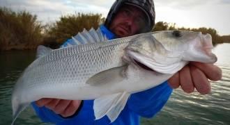 Pêche au bar en Espagne