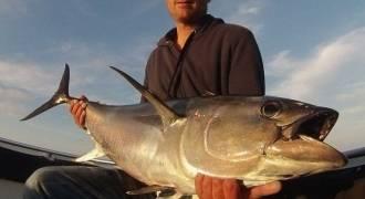 Pêche au thon en Méditerranée dans les Bouches-du-Rhône