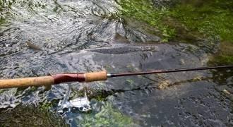 Pêche des poissons migrateurs à la mouche et au lancer
