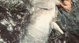Pêche au thon dans le Morbihan