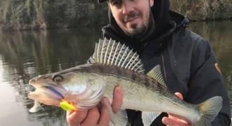 Pêche des carnassiers sur le Lot