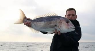 Pêche du denti en Méditerranée