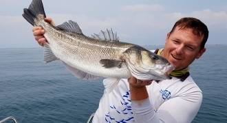 Pêche du Loup sur le Delta du Rhône