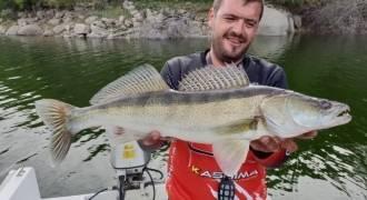 Pêche du sandre au Portugal