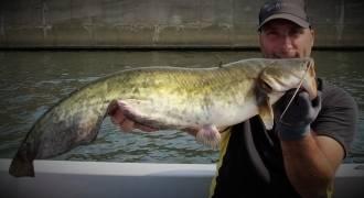 Pêche du silure en Belgique