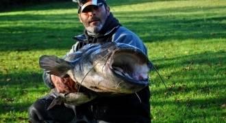 Pêche du Silure Glane en Dordogne
