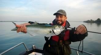 Pêche du tassergal sur le Delta du Rhône
