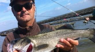 Lure fishing in Ile de Ré