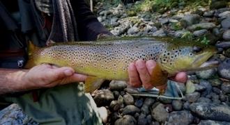 Stage de confirmation de pêche à la truite en Ariège