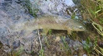 Stage de perfectionnement de pêche à la truite en Ariège