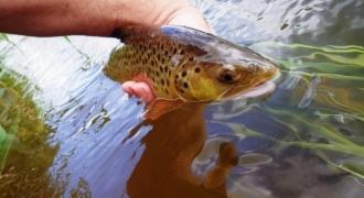 Découverte de la pêche au toc dans la vallée de la Creuse