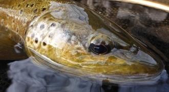 Perfectionnement de pêche à la mouche en Ardèche