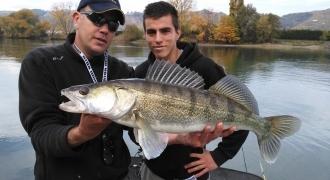 Pêche des carnassiers sur le Rhône