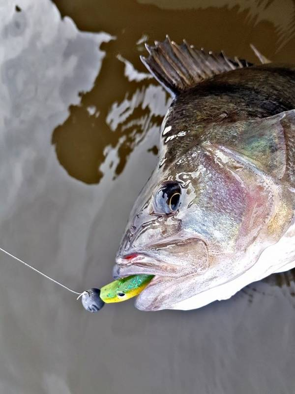 Découverte de la pêche des carnassiers dans l'Ain
