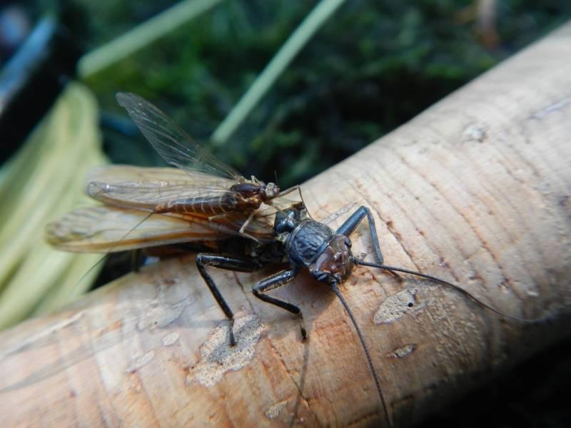Stage de pêche à la mouche en Savoie