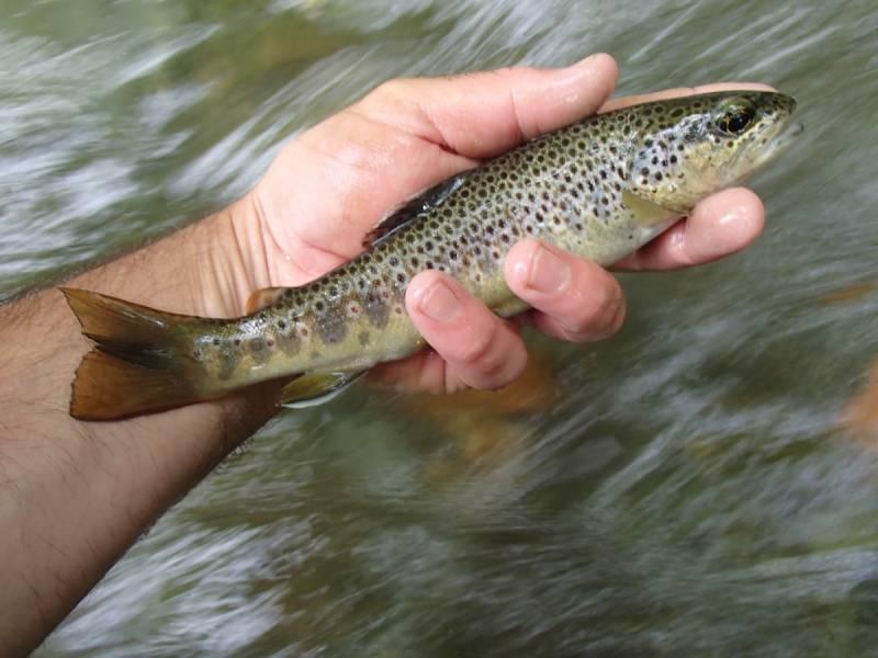 Pêche au toc dans l'Ariège