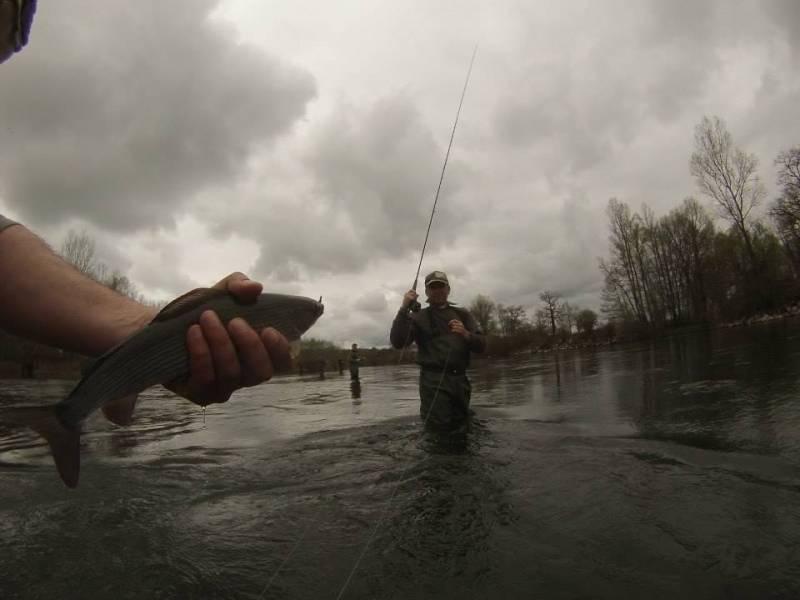 Pêche de la truite et de l'ombre à la mouche sur la Dordogne