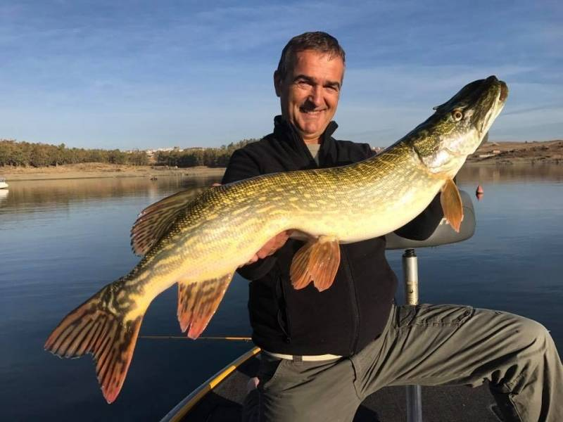 Giant pike fishing in Extremadura