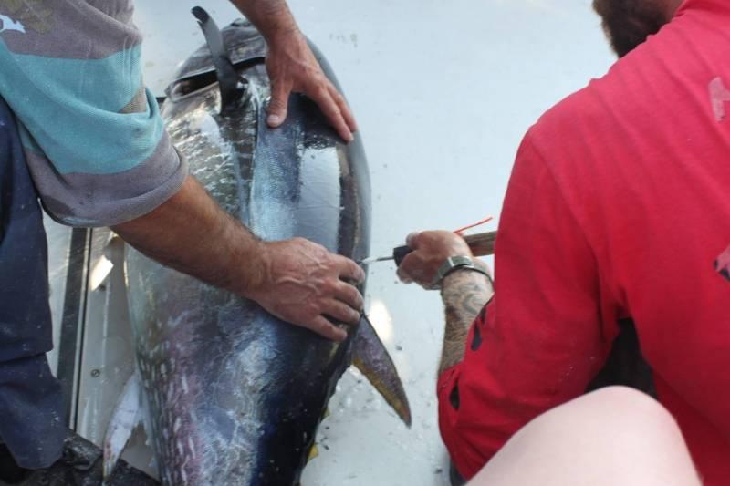 Pêche du thon au leurre au large du Bassin d'Arcachon