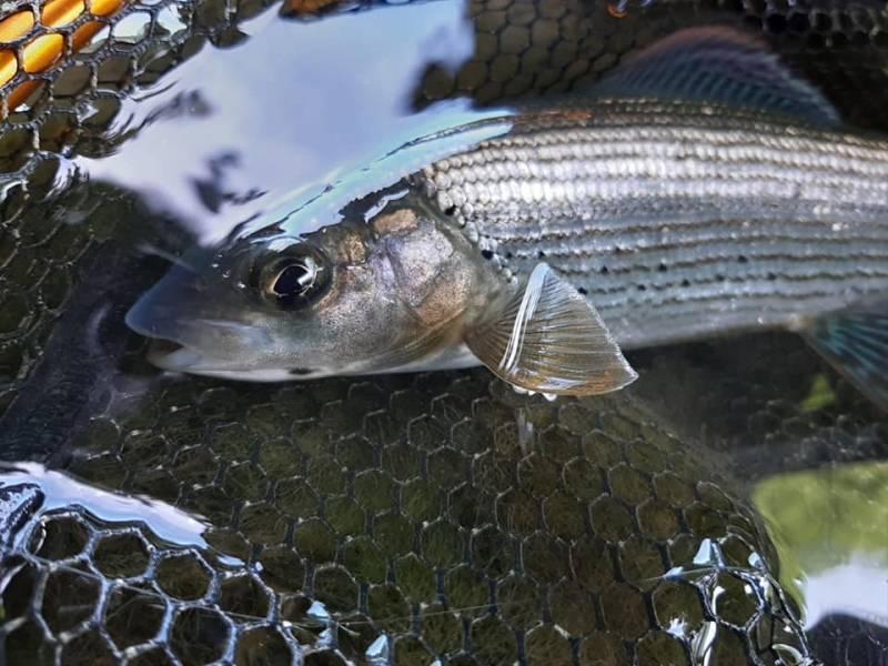 Pêche à la mouche en Haute-Marne