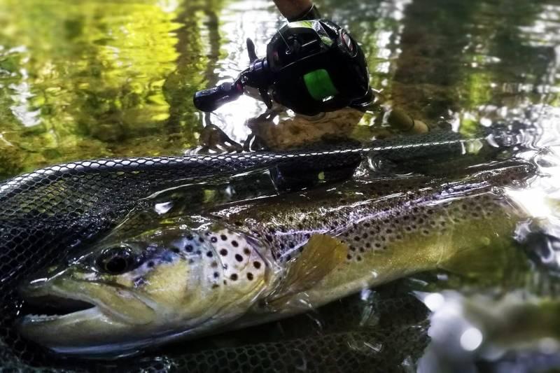 Pêche de la truite aux leurres dans les rivières de Haute-Marne