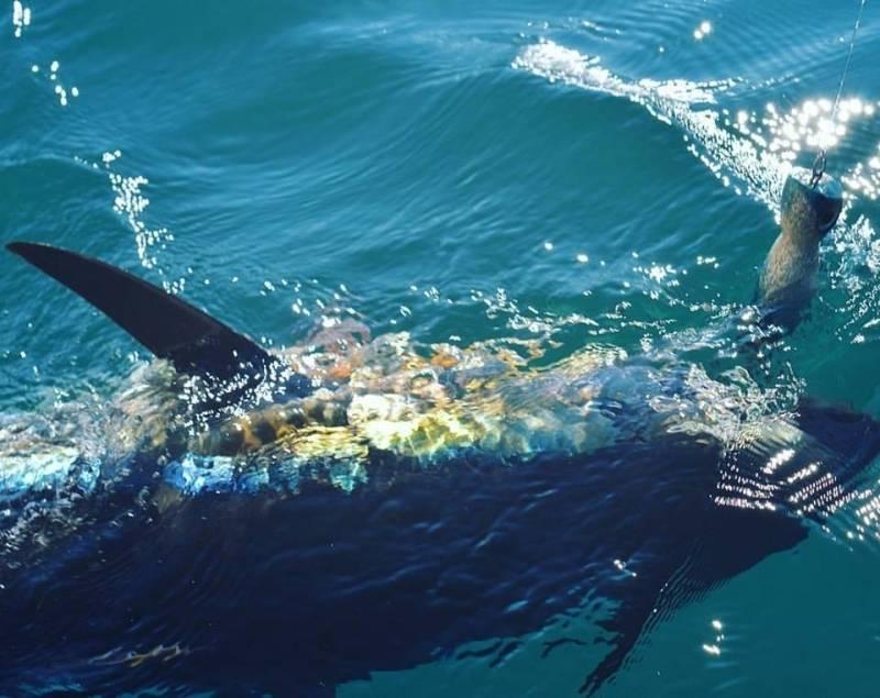 Bluefin tuna fishing in Mediteranean sea