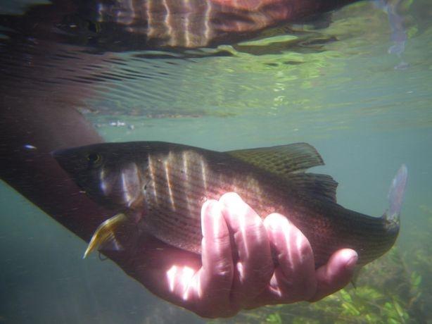 Pêche à la truite en Savoie et Haute-Savoie