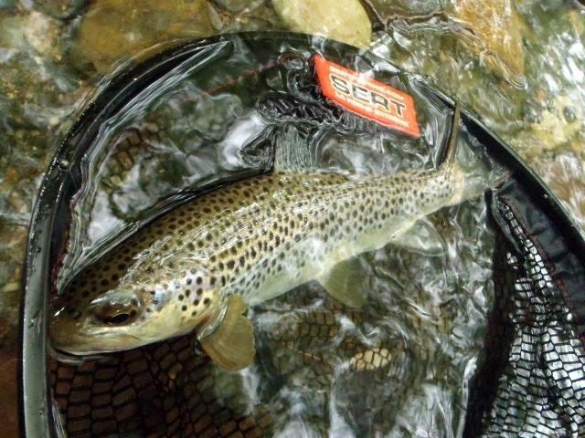 Stage de pêche à la mouche dans les Pyrénées Atlantiques