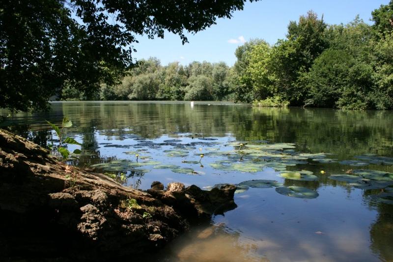 Pêche du silure dans la vallée de la Saône